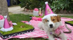 humanizar-cachorro
