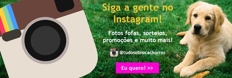 Instagram Tudo Sobre Cachorros
