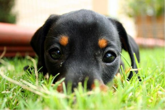 l-Puppy-eyes
