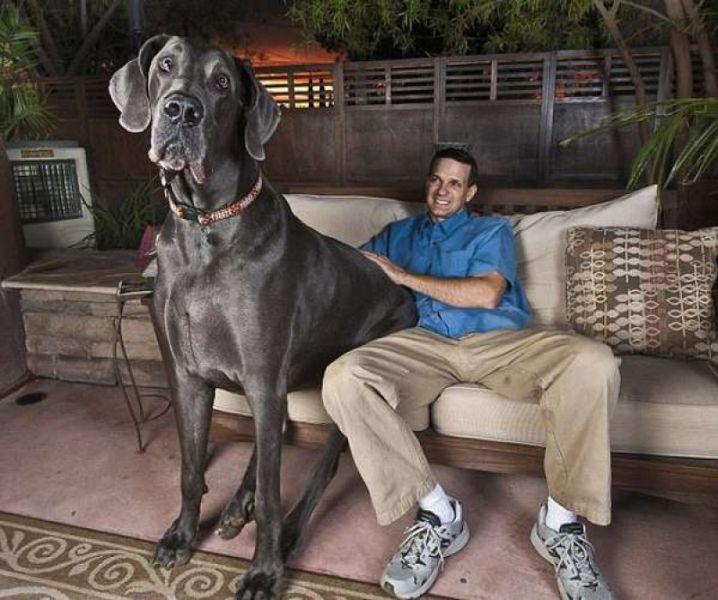 maior-cachorro-do-mundo