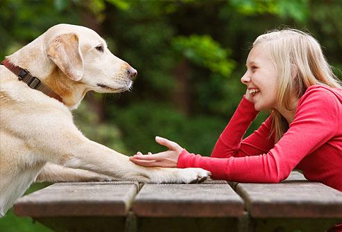 mania - falar com o cachorro