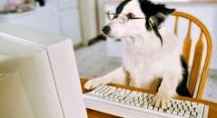 Melhores sites e blogs sobre cachorros