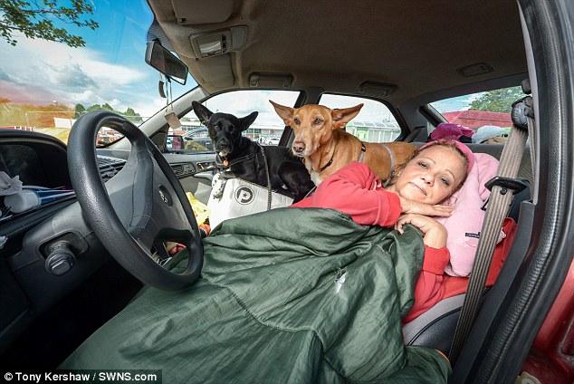 mulher-vivendo-carro-cachorros