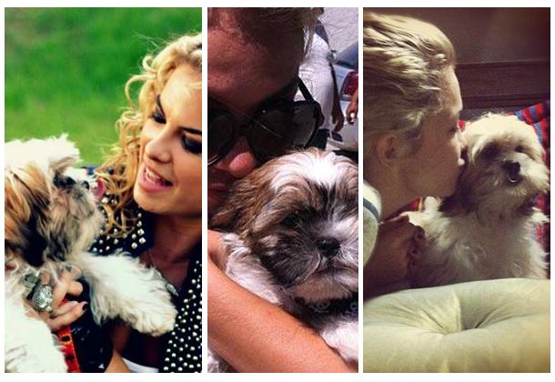 nome-cachorros-celebridades-atriz-cantora-lua-blanco-Freddier