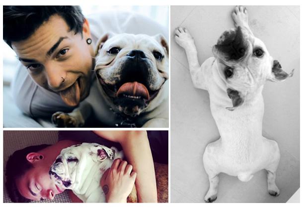 nome-cachorros-celebridades-cantor-di-ferrero-dimba-