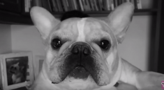 canal tudo sobre cachorros