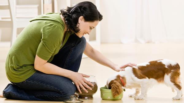 Pet Sitter, ótima opção para cães caseiros
