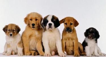 preços de cachorro
