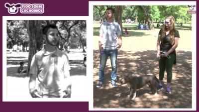 programa tudo sobre cachorros