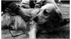 Projeto Vira-latas, o verdadeiro cão de raça