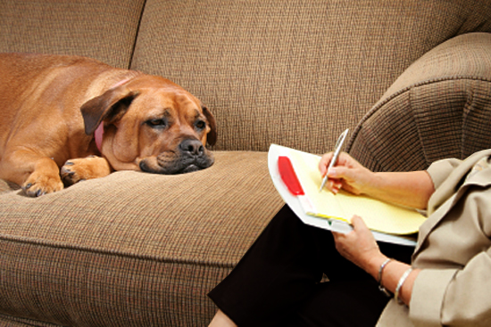 Resultado de imagem para psicologos para cachorro