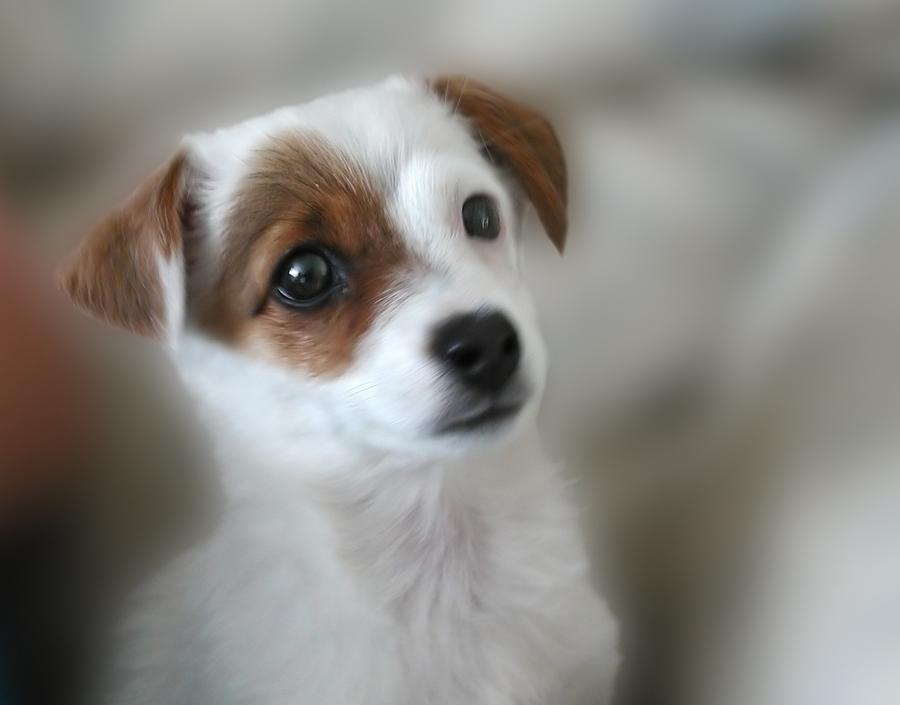 Resultado de imagem para filhotes de cachorro