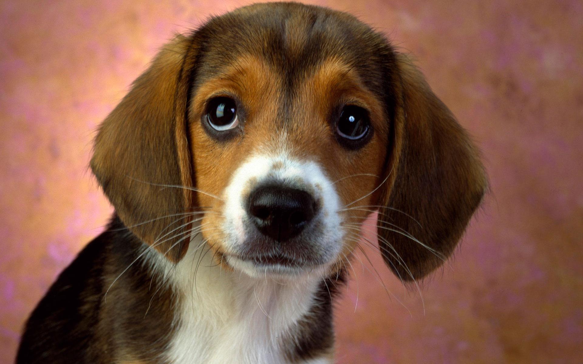 puppy_eyes_1920x1200