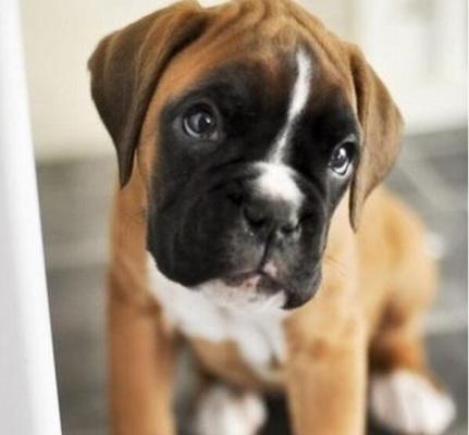puppyeyes-9