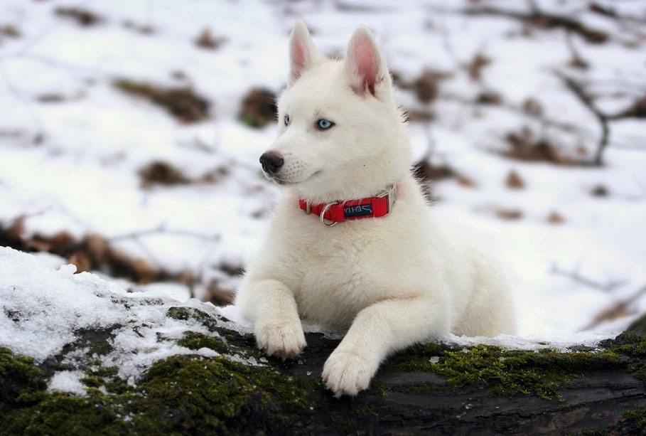 Ra 231 As De Cachorros Letra I Tudo Sobre Cachorros