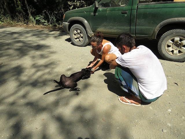 resgate-cadela-abandonada-costa-rica