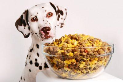 resto de comida cachorro