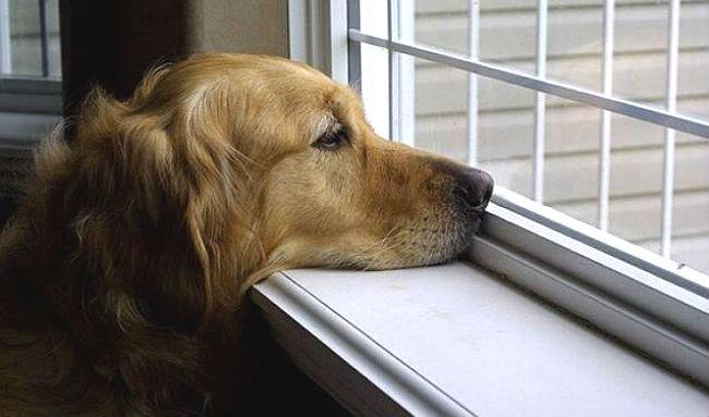 seu-cachorro-sente-sua-falta