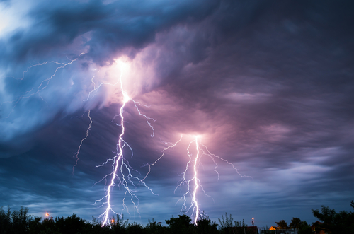 cães conseguem prever tempestade