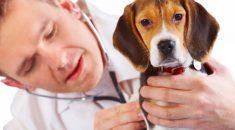 sinais de que precisa ir no veterinario