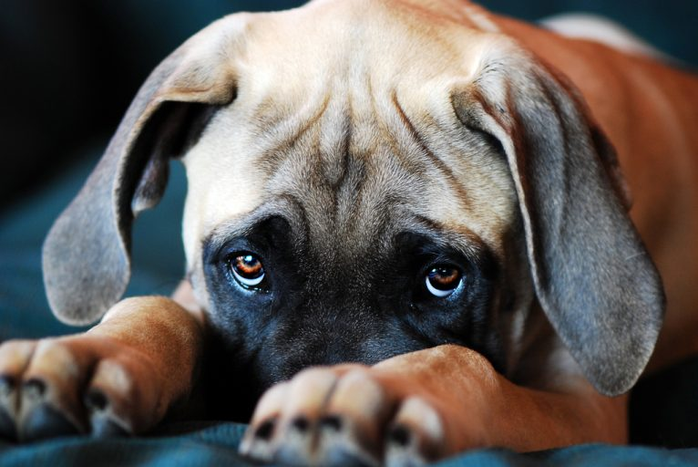 so quem tem cachorro entende 6