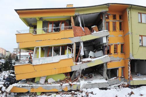 cães conseguem prever terremoto