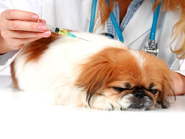 vacinas cachorro