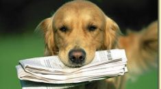 cachorro trabalho
