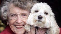 cachorros pessoas idosas