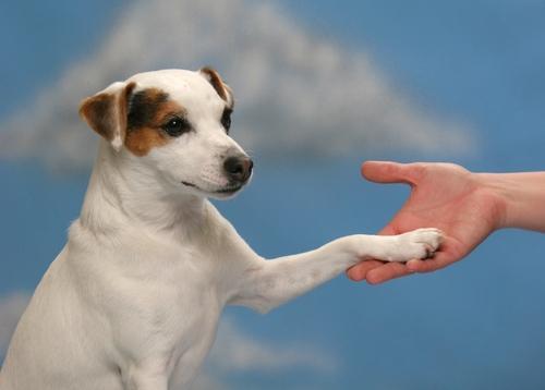 bater no cachorro