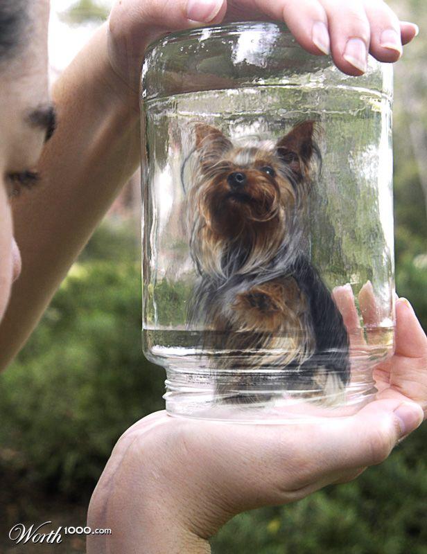 Cachorro miniatura