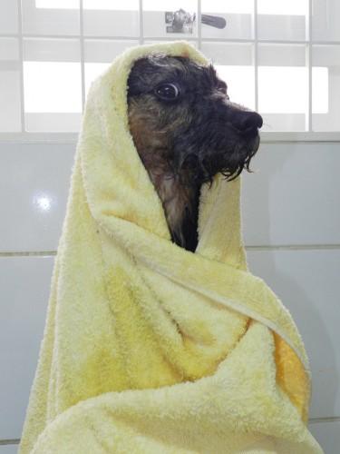 muito banho faz mal em cachorros
