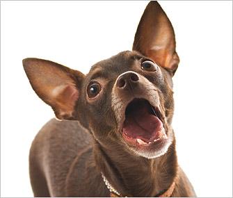 sons que os cães fazem