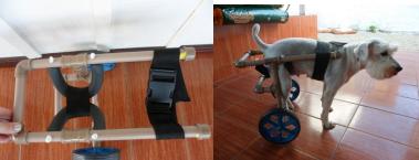 cadeira de rodas para caes 15