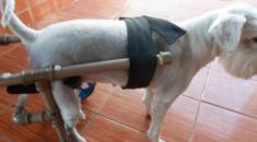 cadeira de rodas para caes 17