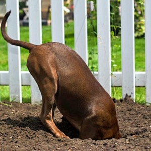 Cavar buracos no jardim