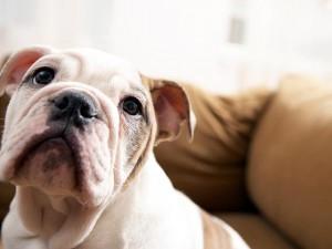 preparar a casa pro cachorro chegar