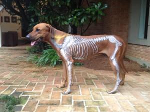 quiropraxia cães