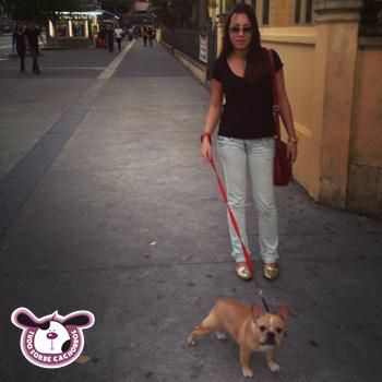 cachorro-deitando-na-rua-na-hora-do-passeio