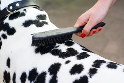 cachorro escova ideal