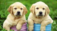 nomes para cachorros