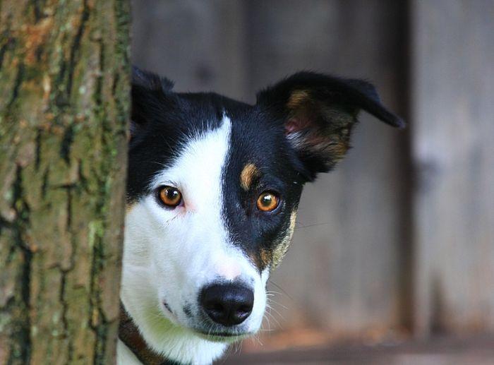 fotos de cachorros