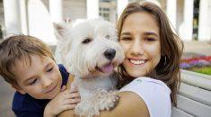 50 frases de cachorros