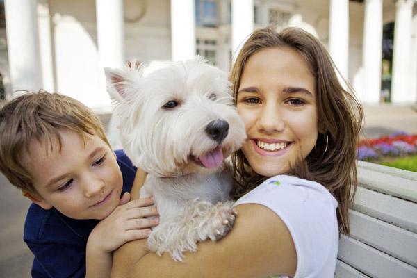 50 Frases De Cachorro Tudo Sobre Cachorros
