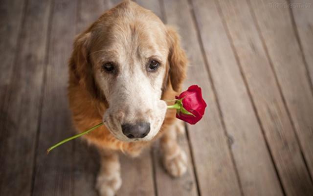 7-vezes-que-seu-cachorro-disse-eu-te-amo
