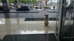 Aeromoça-adota-cão-que-a-esperava-na-porta-do-hotel-02