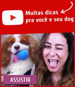youtube tudo sobre cachorros