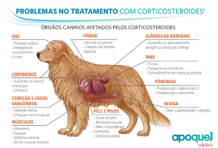corticoide-pra-cachorro