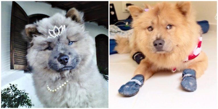 Lassie, da Camila. 6 meses / 3 anos