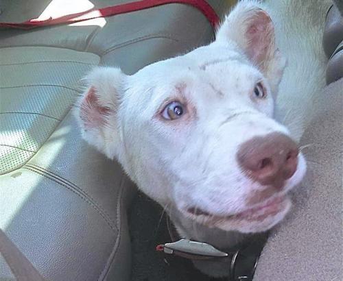 cachorro-que-vivia-assustado-acorda-no-meio-da-noite-para-agradecer-a-sua-salvadora-04